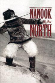Kuzeyli Nanook
