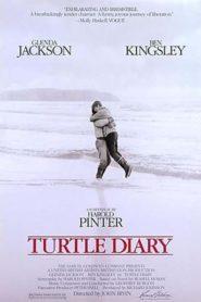 Kaplumbağa Günlüğü