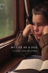 Köpek Olarak Hayatım