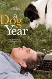 Bir Köpek Yılı