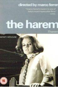 Her Harem